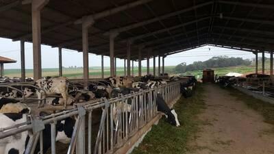 Brazilian dairy farm
