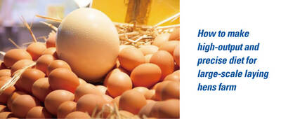 How to make high-output and precise diet for large-scale laying hens farm