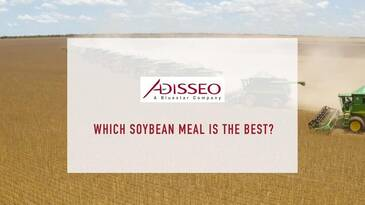 Which Soybean Meal is better? SBM Survey 2019