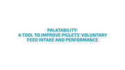 A tool to improve piglets volountary feed intake and performance
