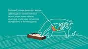 Russian: A fat digestion and absorption enhancer for feeding monogastric species