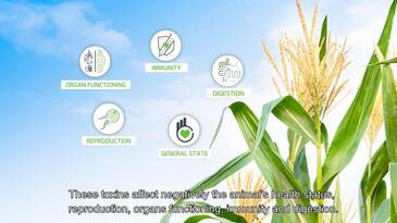 Mycotoxin risk management - Adisseo