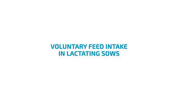 Voluntary feed intake of lactating sows