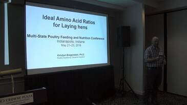 Ideal Amino Acid Ratios for Laying Hens