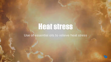 Use of essential oils to fight heat stress