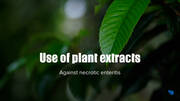 Use of plant extracts against necrotic enteritis - Mechanism of action