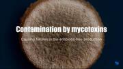 How mycotoxin contamination can make your antibiotic-free program fail