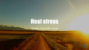 Heat stress and chicken meat quality