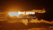 Hot environments and oxidative stress in the gut