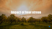 Heat stress and eggshell quality