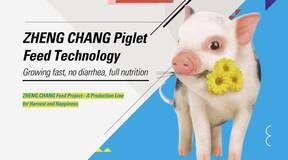 ZHENG CHANG Piglet Feed Technology