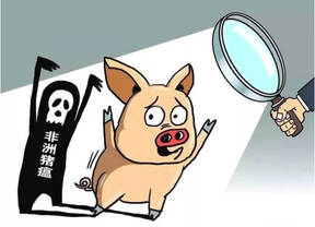 "Say ""NO"" to African swine fever!"