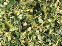 Chopped length of maize silage