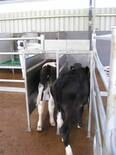 Free access to the DeLaval calf feeder