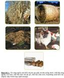 biomasst
