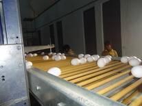 Egg  Lift System