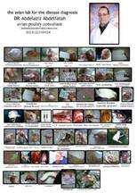 atlas of poultry disease in brief  collection
