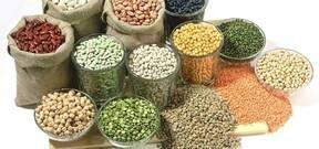 Bean processing equipment