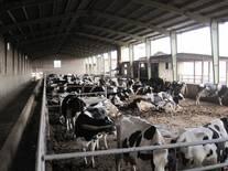 Amir V Gilani Farm