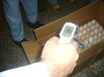 Hatching eggs temperature with Infra red thermometer in hatchery.