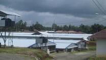 Sukamulya 1 Farm Broiler breeders