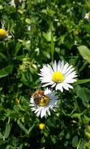 What You Can Do to Help Save the Bees!