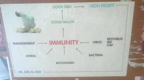 factor affecting immune system of birds