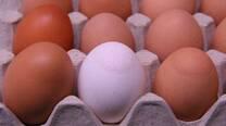 Egg Apex Abnormalities (EAA) caused by Mycoplasma Synoviae