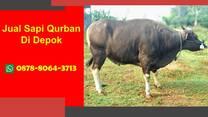 KUALITAS NO.1, Sapi Qurban Premium Depok WA 0878-8064-3713