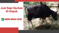 PREMIUM, Jual Sapi Qurban Di Wilayah Depok WA 0878-8064-3713