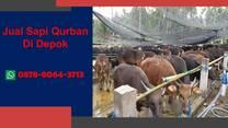 PILIHAN, Harga Sapi Qurban 2021 Depok WA 0878-8064-3713