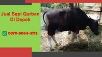 UNGGULAN, Bisnis Sapi Qurban Depok WA 0878-8064-3713