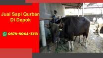 TERBAIK, Berapa Harga Sapi Qurban Depok WA 0878-8064-3713