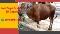 Harga 1 Ekor Sapi Qurban 2021 Depok WA 0878-8064-3713