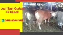 Harga Sapi Bali Qurban 2021 Depok, WA 0878-8064-3713