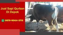 Harga Sapi Bali Qurban Di Depok, WA 0878-8064-3713