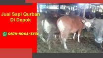 TERBAIK, WA 0878-8064-3713 Harga Sapi Kurban Di Bojongsari Depok