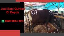 {WA 0878-8064-3713} Jual Sapi Qurban Depok, Sukmajaya, Tapos, Beji, Bojongsari, Cilodong