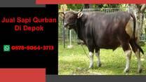 {WA 0878-8064-3713} Jual Sapi Qurban Depok, Tapos, Beji, Bojongsari, Cilodong, Cimanggis