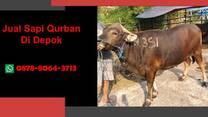 {WA 0878-8064-3713} Jual Sapi Qurban Depok, Beji, Bojongsari, Cilodong, Cimanggis, Cinere