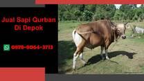 {WA 0878-8064-3713} Jual Sapi Qurban Depok, Cinere, Cipayung, Pancoran Mas, Sawangan, Sukmajaya