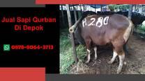 (WA 0878-8064-371) Jual Sapi Qurban Depok, Bojongsari, Cilodong, Cimanggis, Limo, Pancoran Mas
