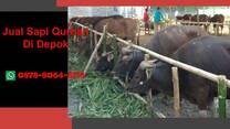 (WA 0878-8064-371) Jual Sapi Qurban Depok, Sukmajaya, Tapos, Beji, Bojongsari, Cilodong