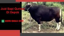 [WA 0878-8064-371] Jual Sapi Qurban Depok, Tapos, Beji, Bojongsari, Cilodong, Cimanggis