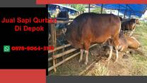 [WA 0878-8064-371] Jual Sapi Qurban Depok, Beji, Bojongsari, Cilodong, Cimanggis, Cinere