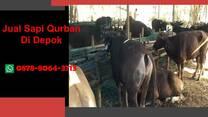 (WA 0878-8064-371) Jual Sapi Qurban Depok, Cinere, Cipayung, Pancoran Mas, Sawangan, Sukmajaya