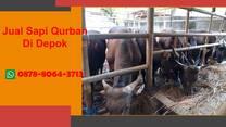 WA 0878-8064-3713   Penjual Sapi Qurban 2021 Lokasi Di Depok
