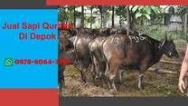 WA 0878-8064-3713, Penjual Sapi Qurban Di Area Depok