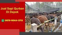 WA 0878-8064-3713, Penjual Sapi Qurban Di Daerah  Depok