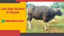 WA 0878-8064-3713, Penjual Sapi Qurban Di Sekitar Depok